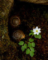 Wildflower and Snails
